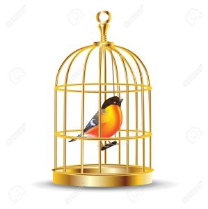 13758772-golden-bird-cage-with-bird-inside-isolated